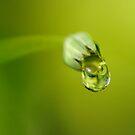 Liquid Garden by Kenneth Haley