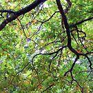 UNDER THE OAK TREE by helmutk