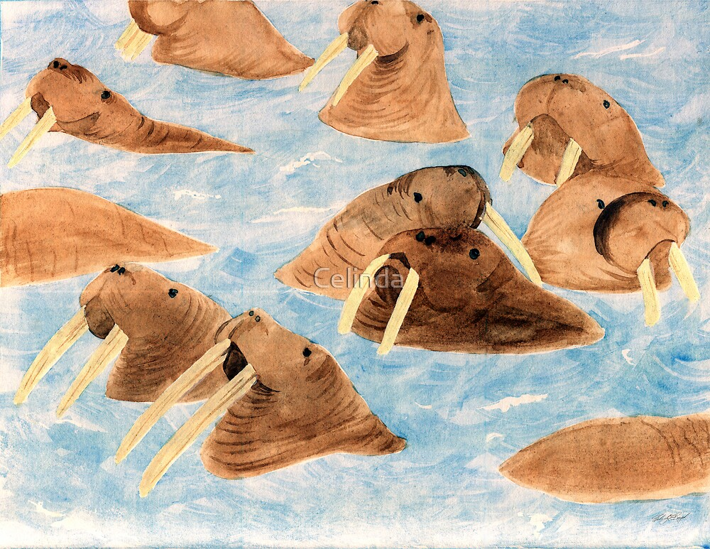 Bathing Walruses by Celinda