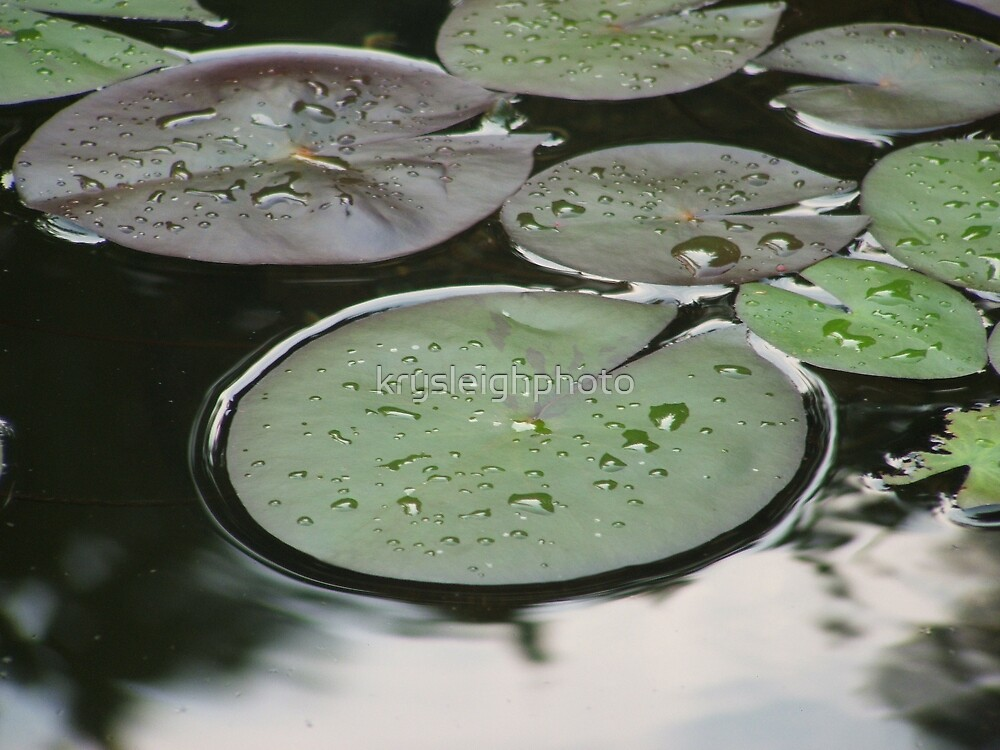 Lily pads by krysleighphoto