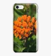 Large Milkweed Bugs iPhone Case/Skin