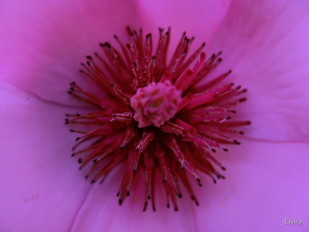 Inside magnolia by Elvira