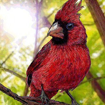 Cardinal by EthanWilson98