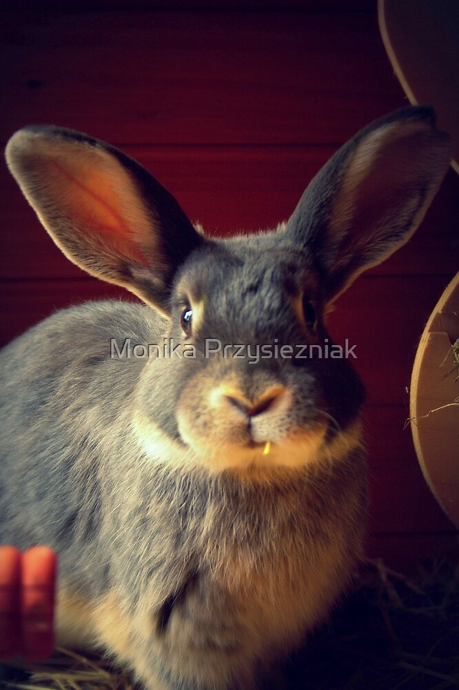 Rabbit #1 by CornyMistick