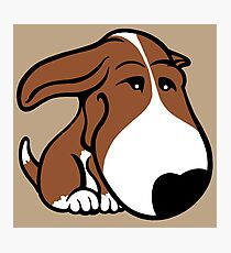 Soppy Bull Terrier Brown and White Coat Photographic Print