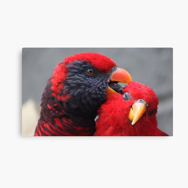 Red Lory....... Canvas Print