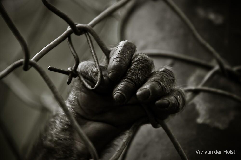 Freedom by Viv van der Holst