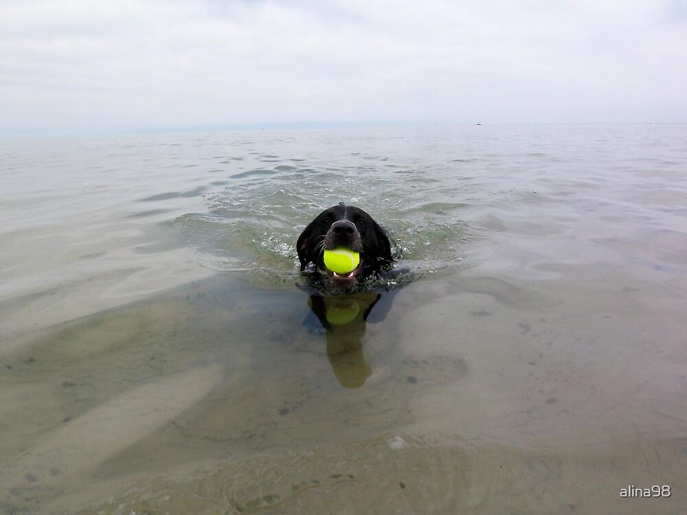 Dog days of summer by alina98