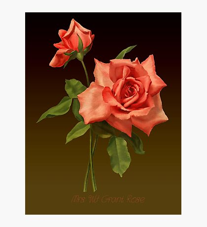 Mrs. WJ Grant Rose Illustration by Pierre-Joseph Redouté  Photographic Print