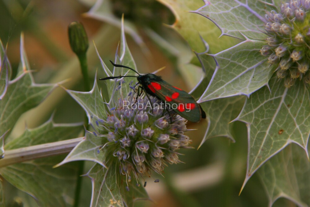 red butterfly spots by RobAnthony