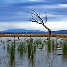 1720 Winton wetlands by Hans Kawitzki