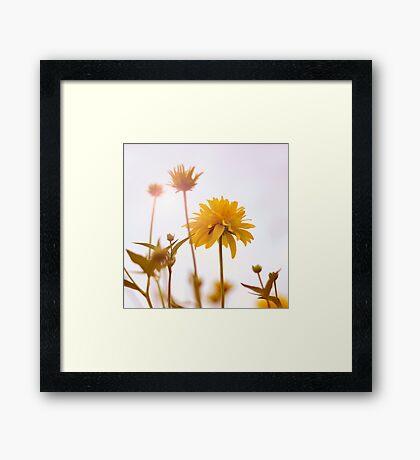 yellow pom-pom Framed Print