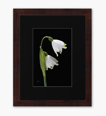 Beautiful Snowdrops Spring Flowers Framed Print