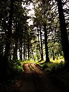 Into The Trees by rorycobbe