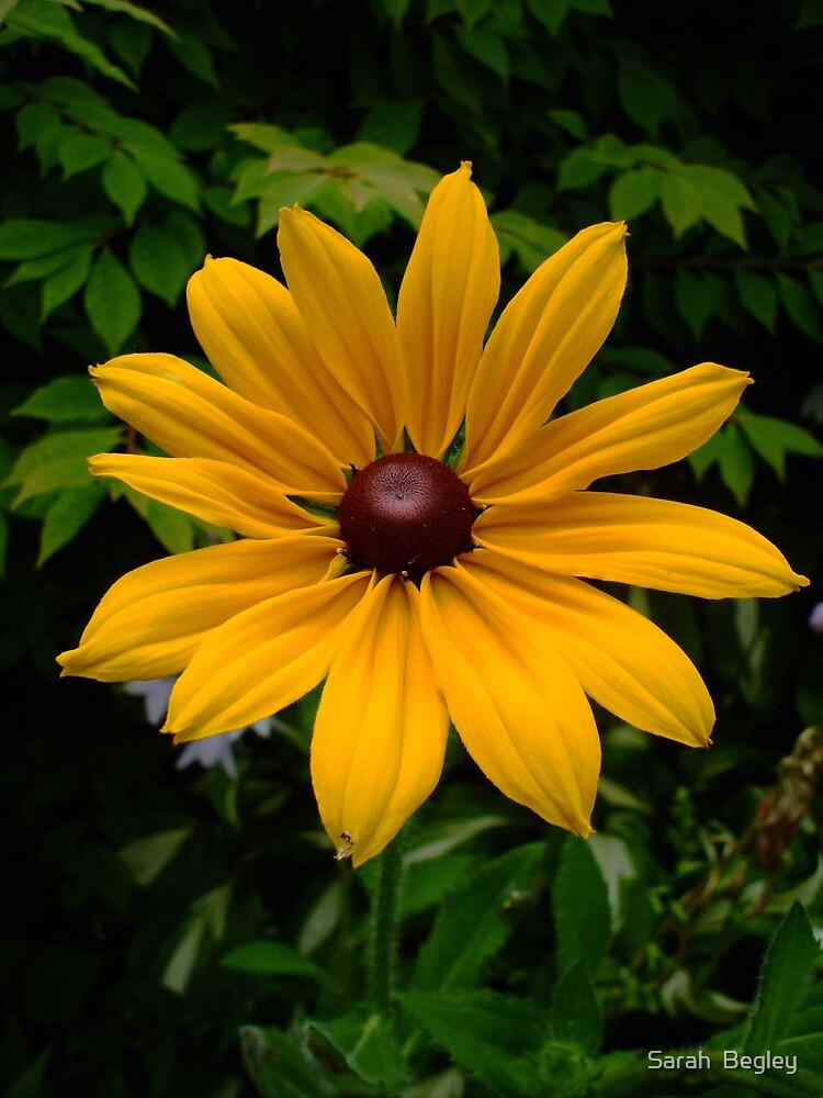 Yellow Flower by Sarah  Begley