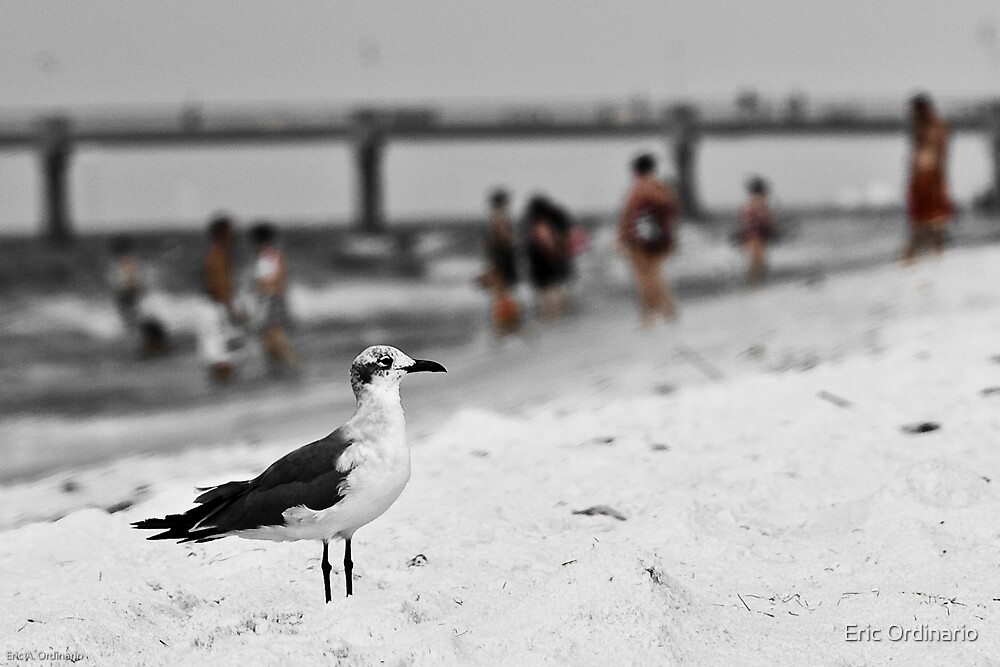 Common Gull & Ordinary People by Eric Ordinario