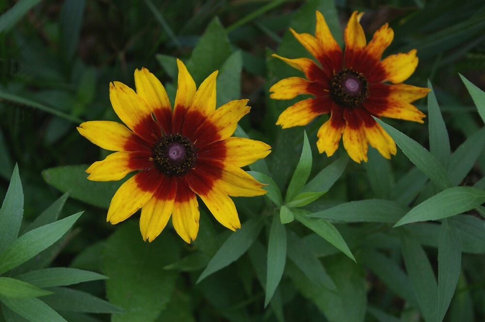 Pair of Yellow Flowers by Tom  Reynen