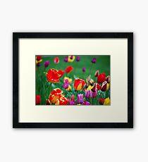 Tulips in the Spring Framed Print
