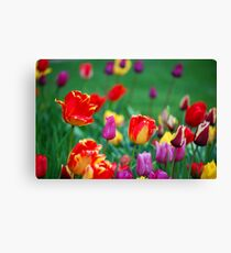 Tulips in the Spring Canvas Print