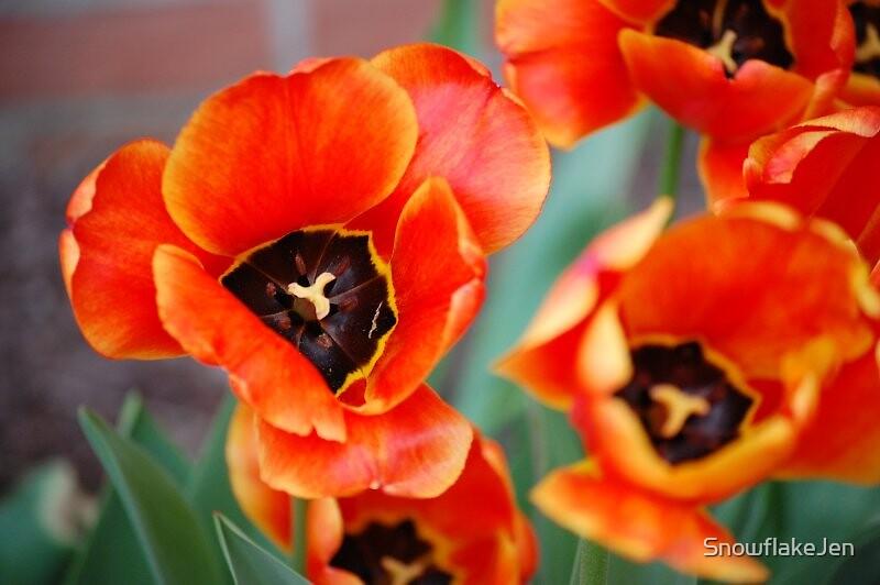 Orange Tulips by SnowflakeJen