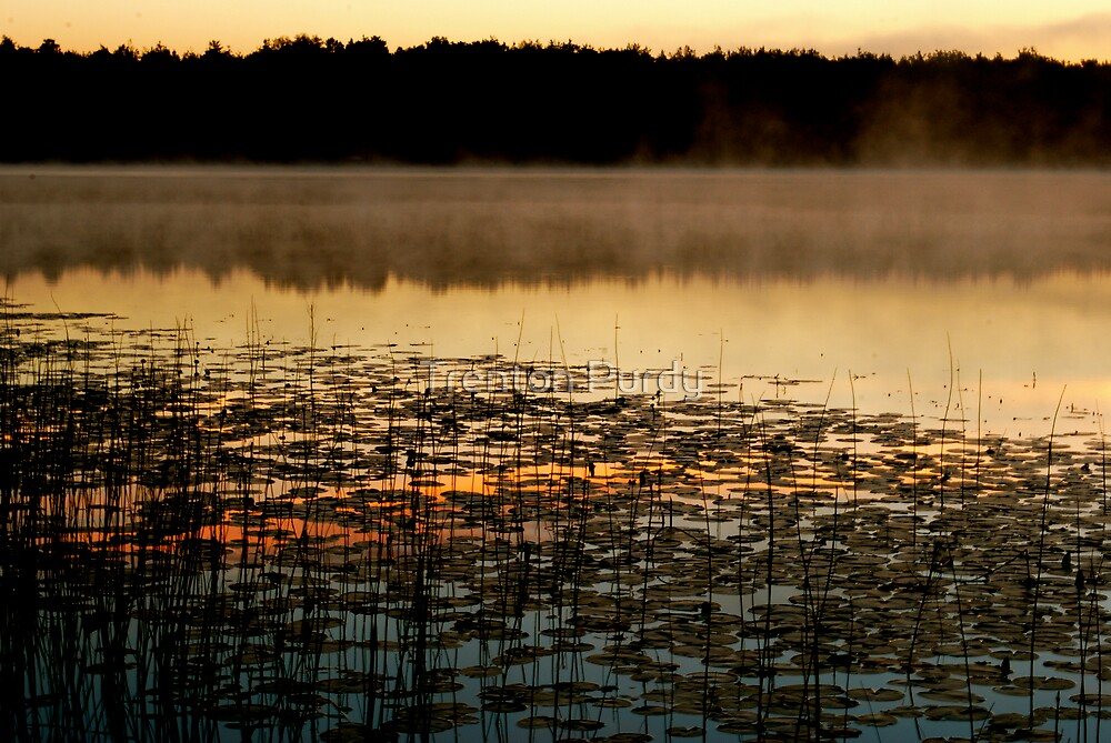 Fog Reflection by Trenton Purdy