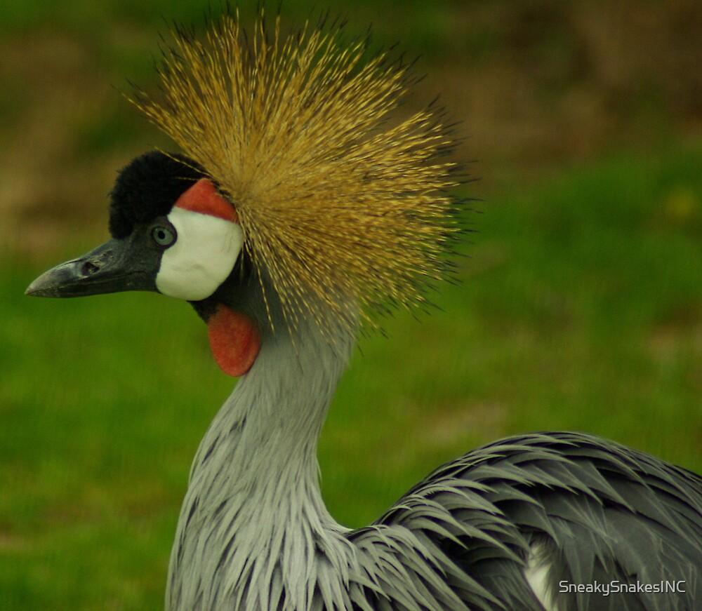 Crowned Crane by SneakySnakesINC