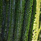 Strange Plantlife - Cactus Garden Barcelona by Georgia Mizuleva