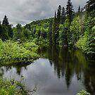 Forest Lake - Charlevoix, Quebec, Canada by Georgia Mizuleva