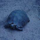 Turtle.. by Ila80