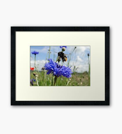 Flight Bee Incoming Framed Print