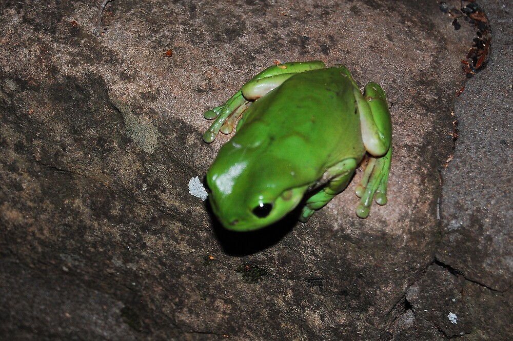 Frog by onic