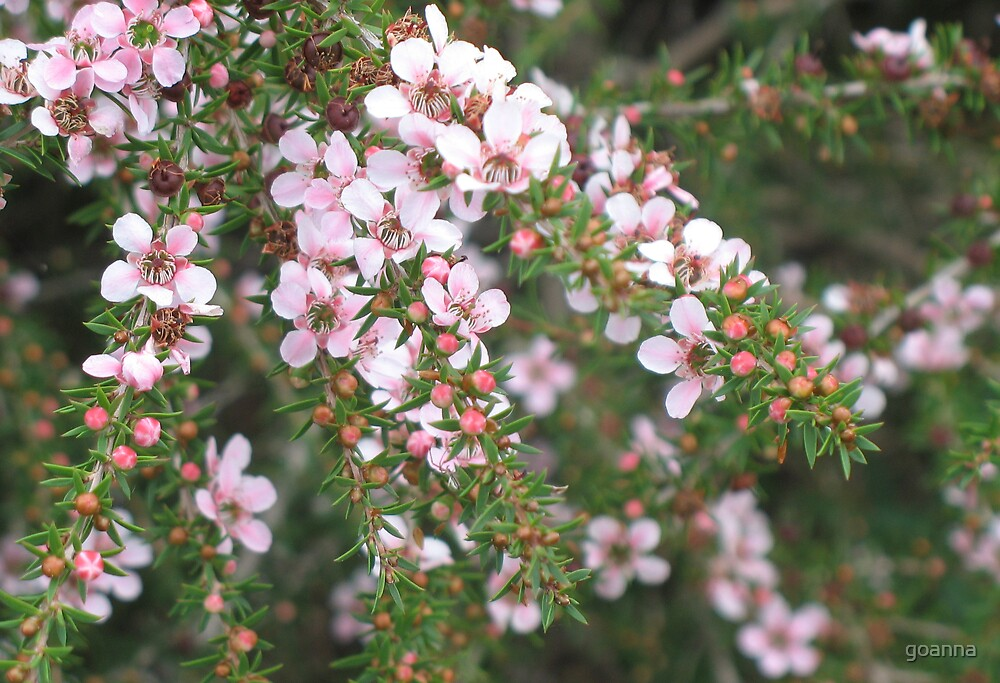 Pink Cascade by goanna