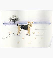 Lakeland Terrier Dog Poster
