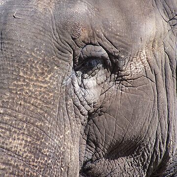 Elephant's Eye by martina