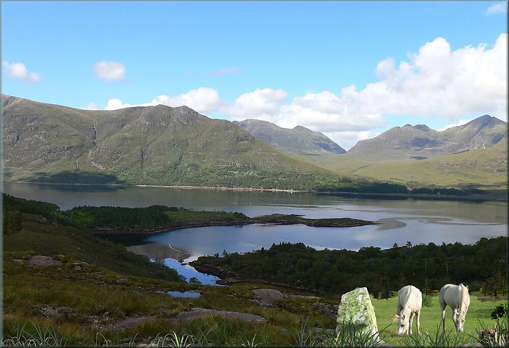 956-Scottish Loch Ponies by George W Banks