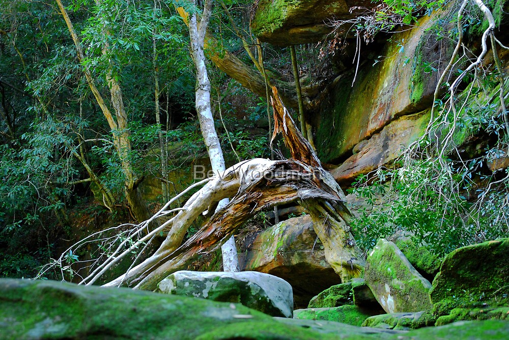 Bowing to the Falls - Somersby Falls by Bev Woodman