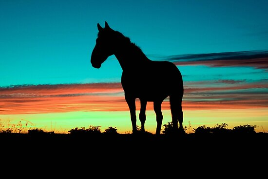 Quot Humpy Horse Silhouette Sunset Psychedelic Quot Poster By