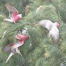 Making a Galah of Themselves # 3 by Craig Watson