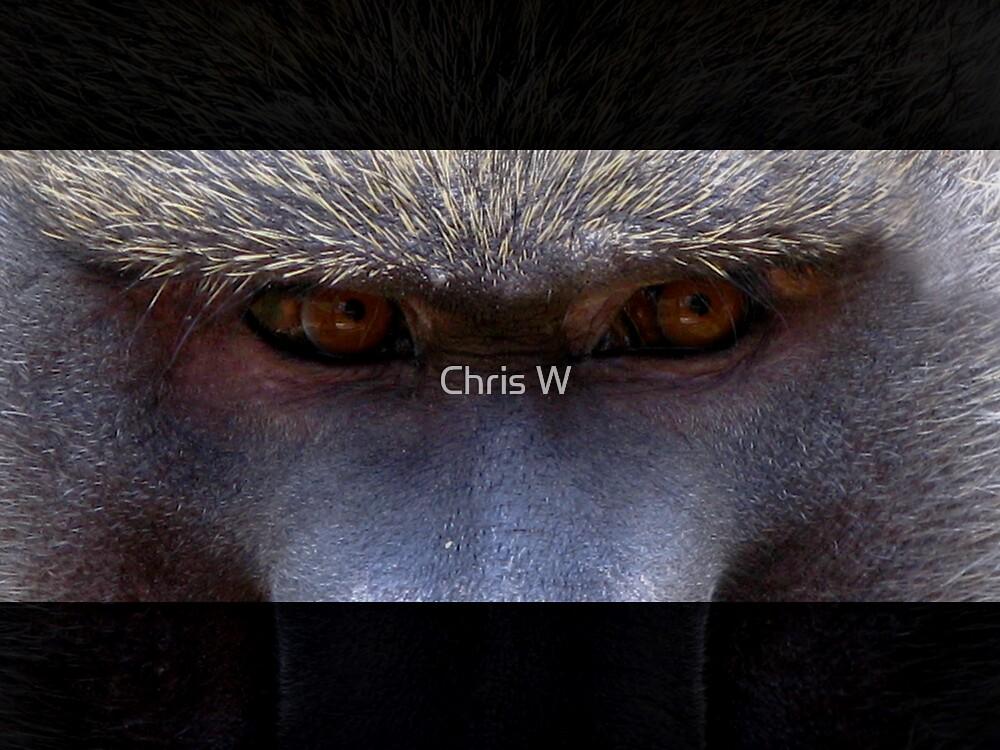 Shifty. by Chris W