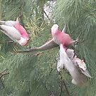Making a Galah of Themselves # 1 by Craig Watson