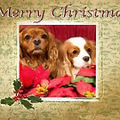 Merry Christmas With Cavalier King Charles Spaniels by daphsam