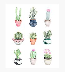 Potted Succulents Photographic Print