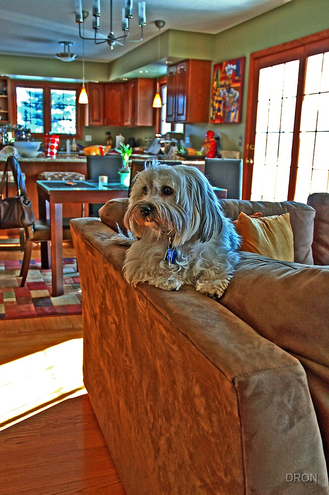 KING OF THE COUCH by DRON