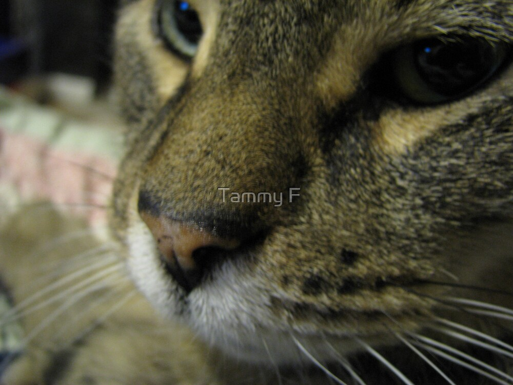 Can I Smell Your Lens? by Tammy F