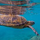 Green Sea Turtle by SteveHphotos
