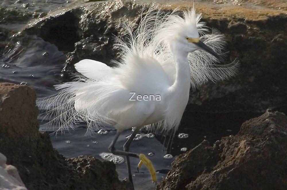 Egret by Zeena
