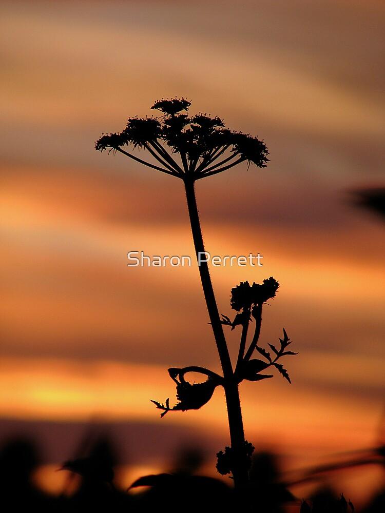 Sunset 3 21-07-08 by Sharon Perrett