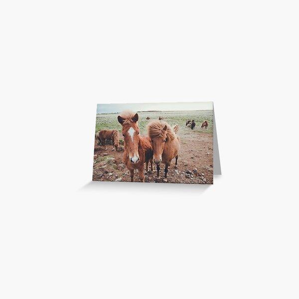 icelandic ponies Greeting Card
