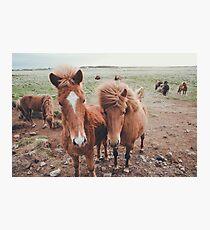 icelandic ponies Photographic Print