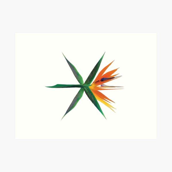 EXO Lámina artística